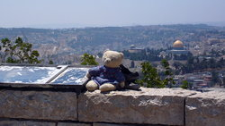 Teddy in Israel